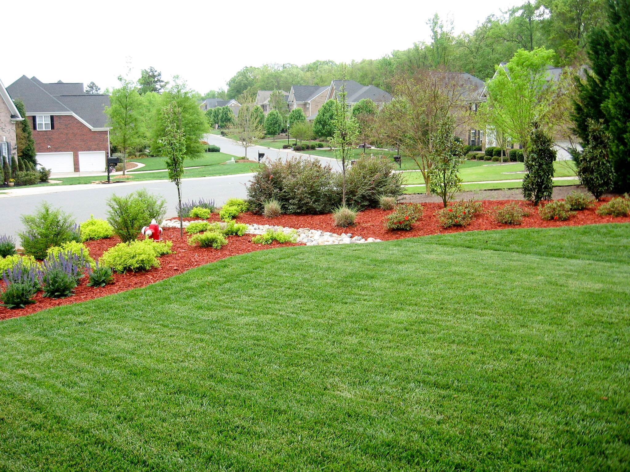 Natural privacy screen ecogreen landscaping for Natural privacy fence