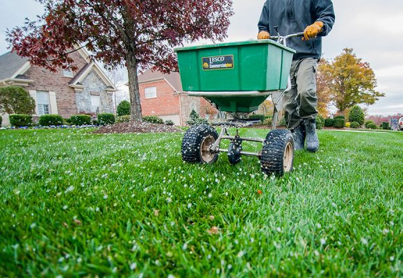 Fescue Lawn Rejuvenation